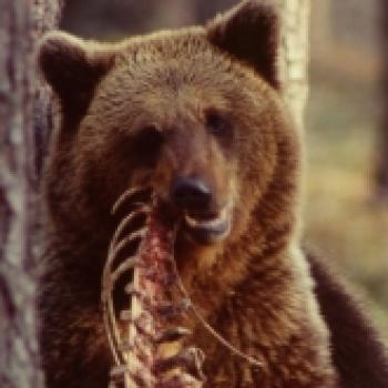 Bearish Bull